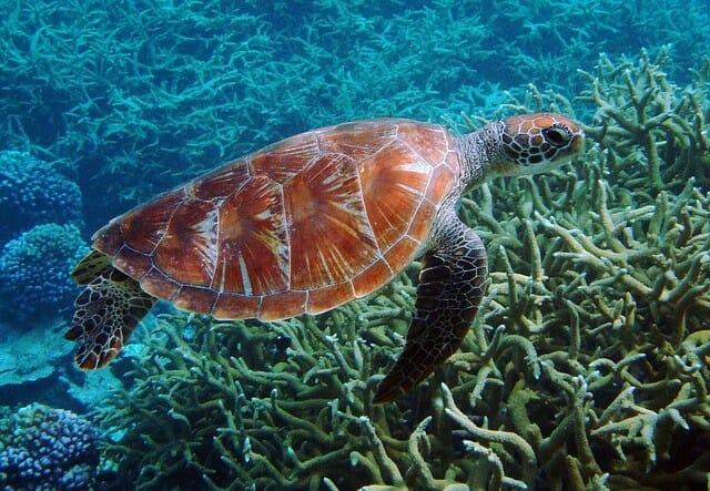 Schildkrötensee