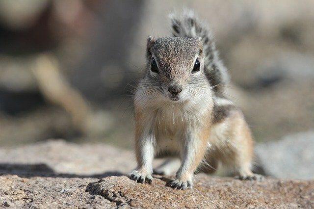 Welche Tiere leben in der Mojave Wüste?