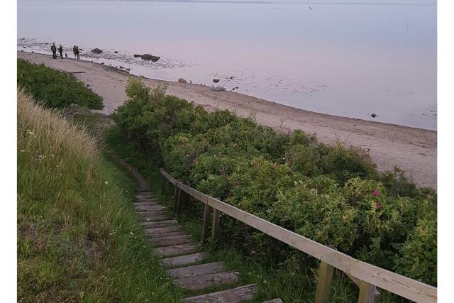 Der Flovt Strand ist perfekt für Hunde