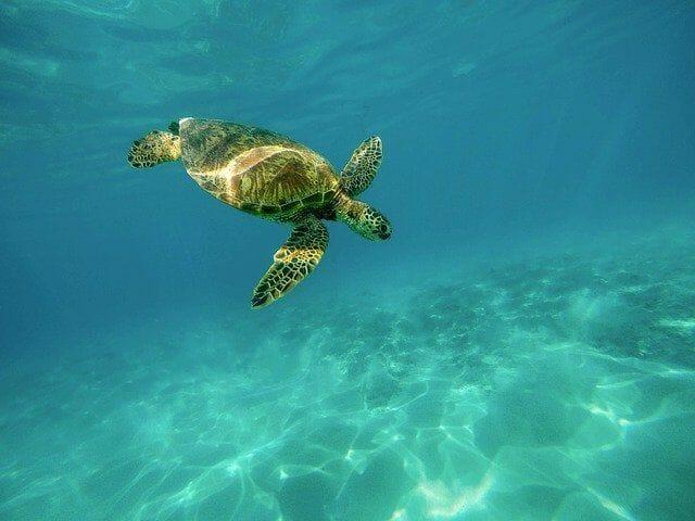 Meeresschildkröten und Divi-Divi-Bäume gibt es am Traumstrand Eagle Beach
