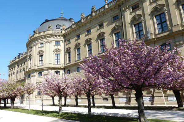 Wann beginnt die erste Kirschblüte in Deutschland zu wachsen?
