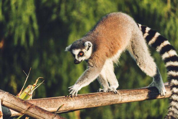 Zoos mit Kinder in Deutschland besuchen