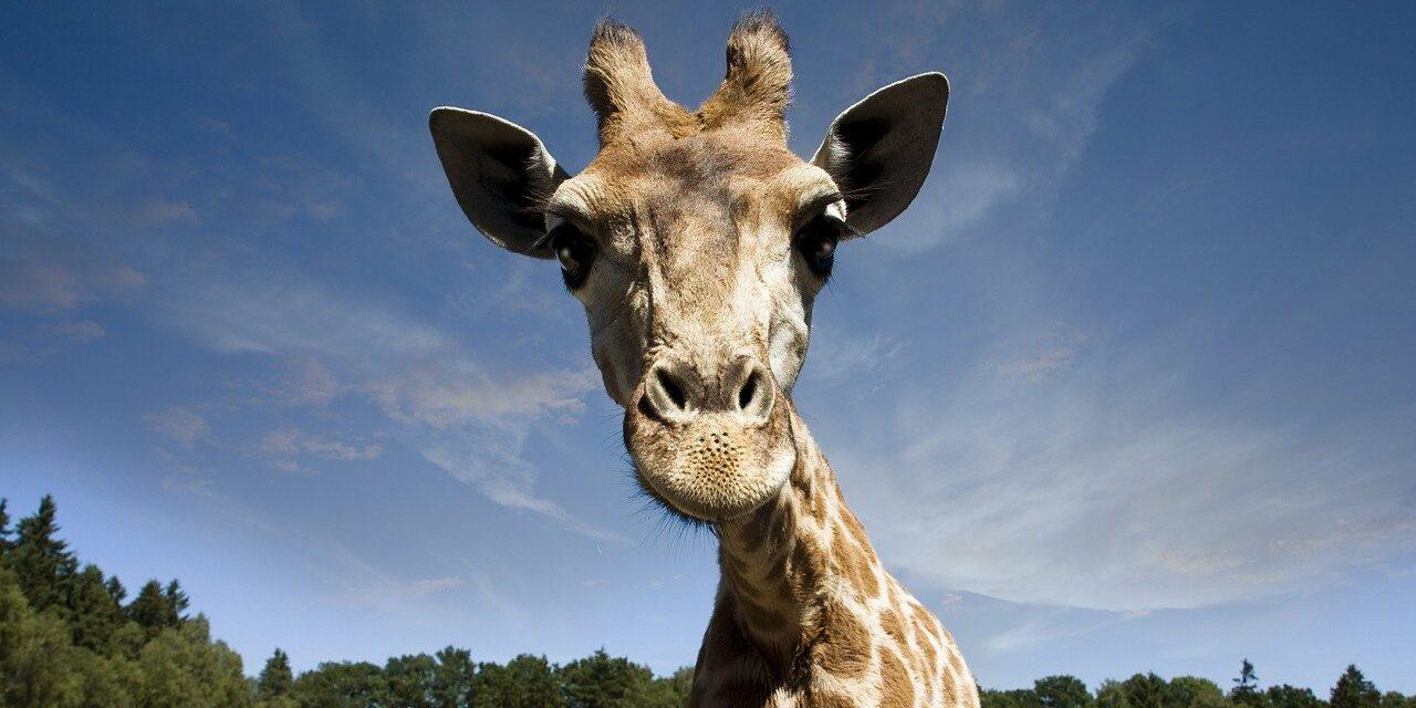 Serengeti Park Übernachtung Angebot