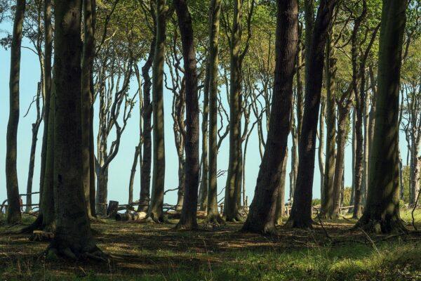 Warum heißt der Ort eigentlich Gespensterwald Nienhagen?